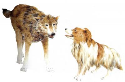"""Fábula:""""El lobo y el perro"""""""
